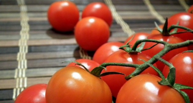 contoh tanaman hidroponik tomat