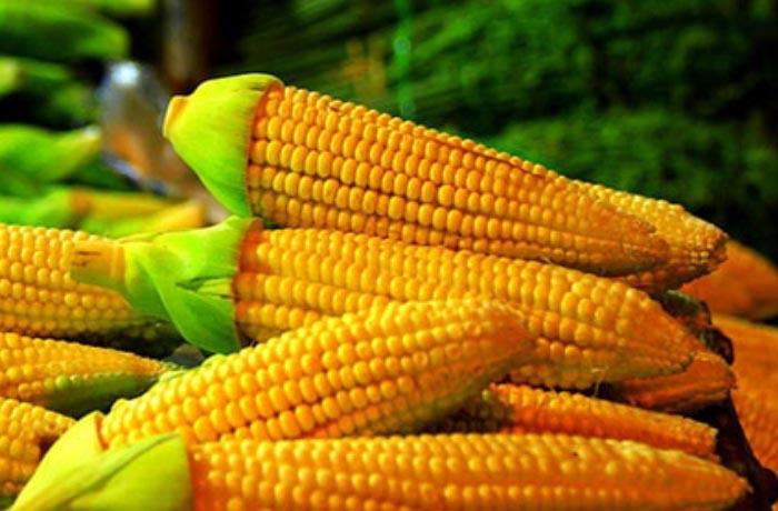 Teknologi Tercanggih di Dunia Mesin Pertanian Modern Pengolah Jagung 4
