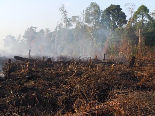 Restorasi Lahan Gambut, Langkah Penting Selamatkan Masyarakat & Lingkungan 5