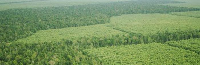 Restorasi Lahan Gambut, Langkah Penting Selamatkan Masyarakat & Lingkungan 2